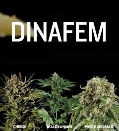 Dinafem Road Runner Cheese White Siberian - BUY HERE