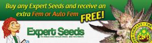 Expert Seeds - Free Marijuana Seeds