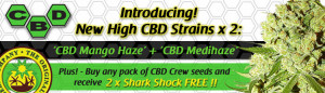 New Cannabis Seeds From CBD Crew