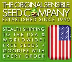 Free Marijuana Seeds With Every TH Seeds DA Purps Purchase.