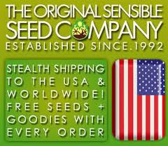 Buy Regular Seeds To The USA