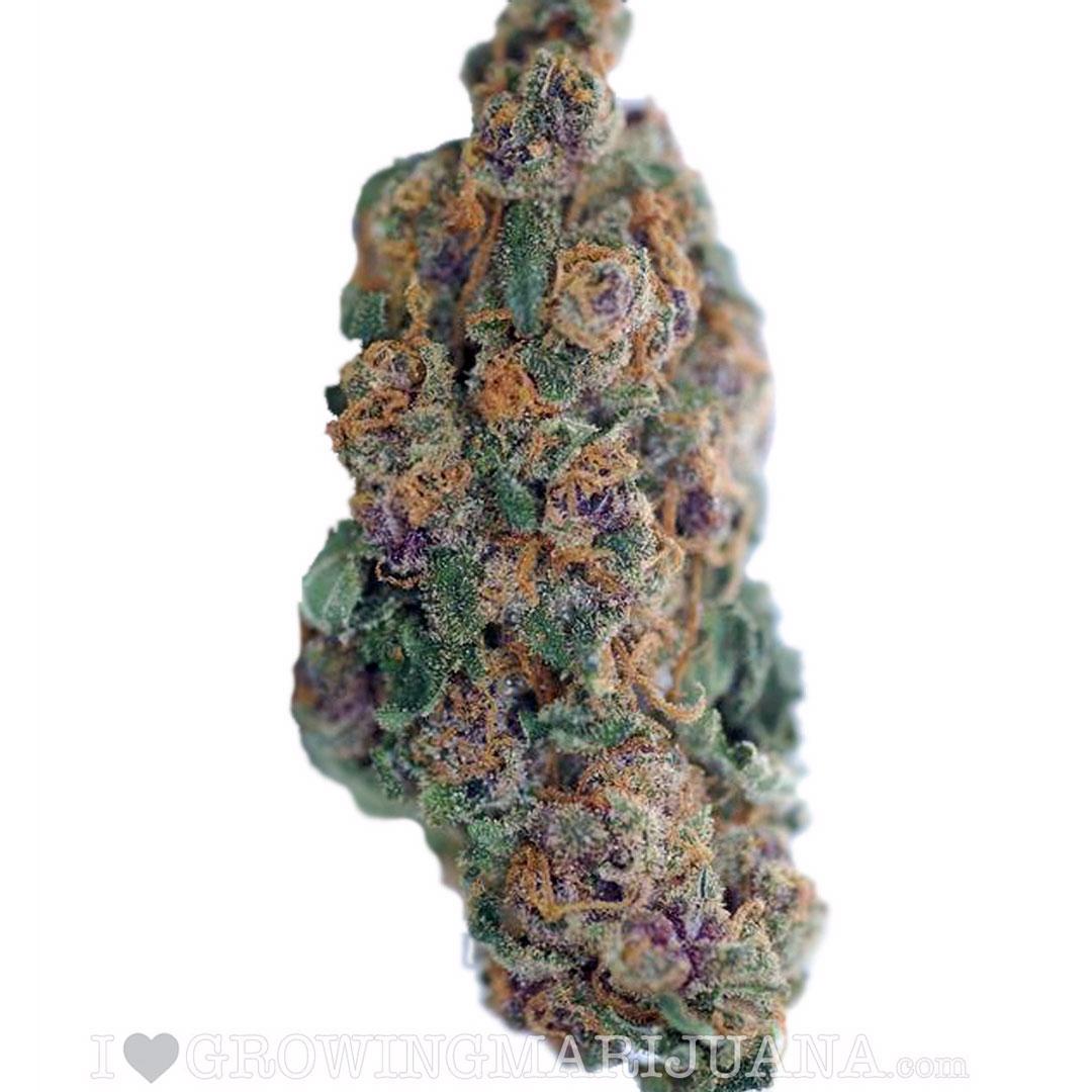 Purple width =