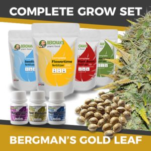 The Complete Gold Leaf Marijuana Seeds Grow Set