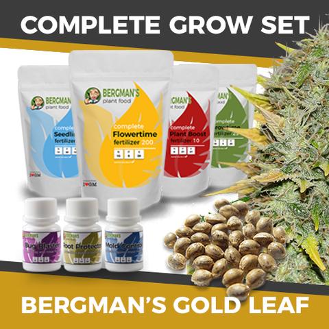 The Complete Gold Leaf Marijuana Seeds Grow Set