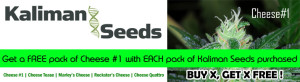 Where to get Marijuana Seeds
