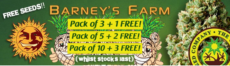 barneys farm Cannabis seeds offer