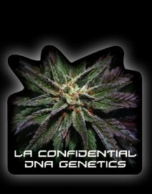 DNA Genetics LA Confidential
