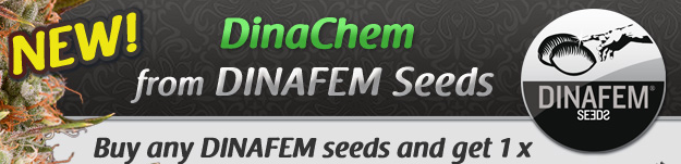 Best Collection of Dinafem Seeds at the Cheapest Prices