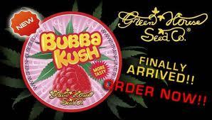 Green House Seeds Bubba Kush