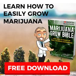 Growing Colorado Marijuana Seeds