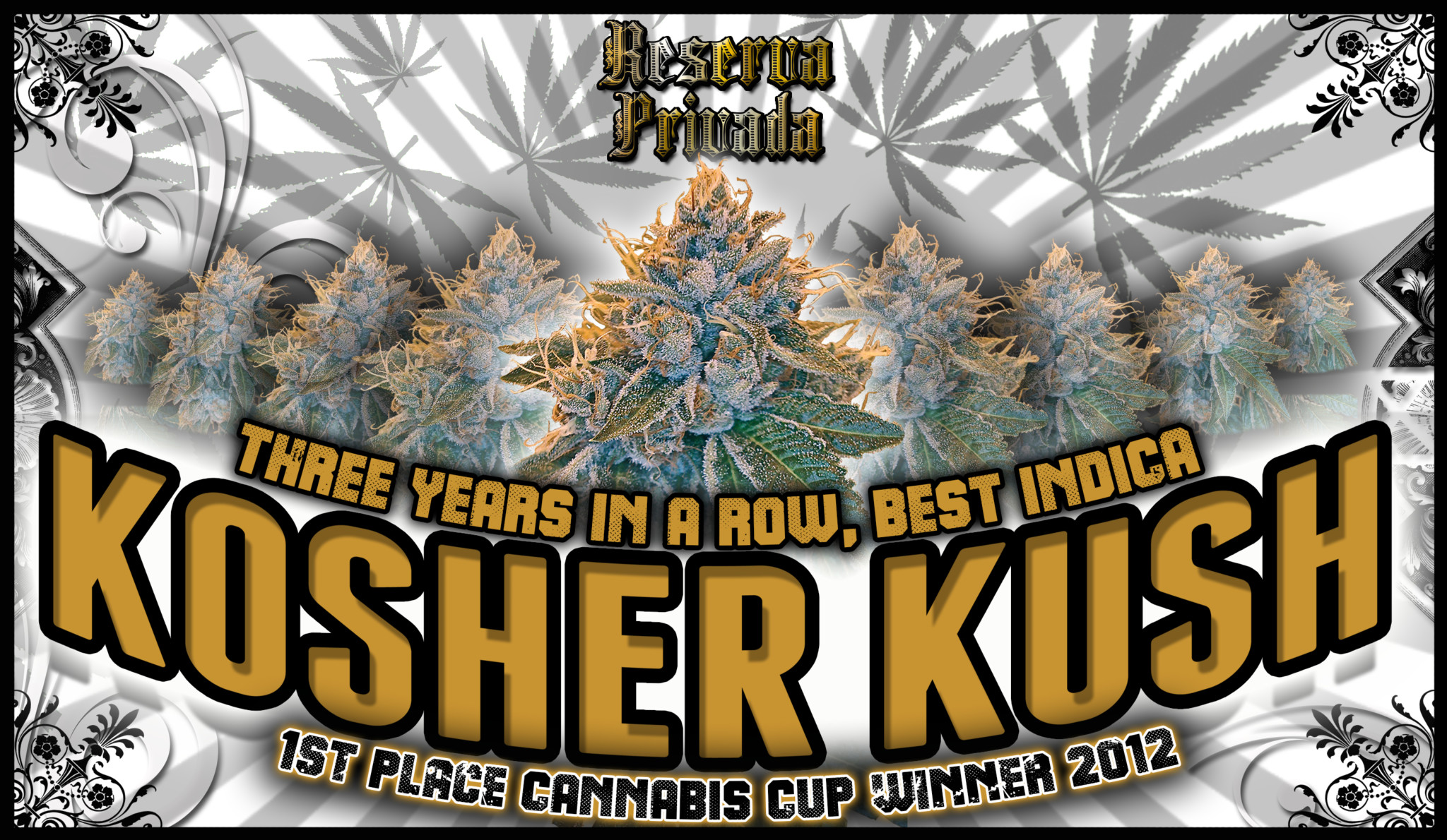 Og Kush Seeds For Sale
