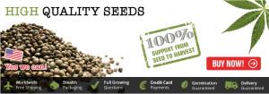 Marijuana Seeds For Sale - Free Worldwide USA Shipping
