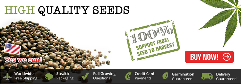 Buy Marijuana Seeds To Canada - Free Shipping
