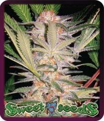 Sweet Seeds Auto