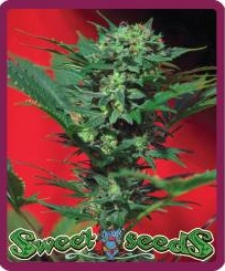 Sweet Seeds Speed Devil