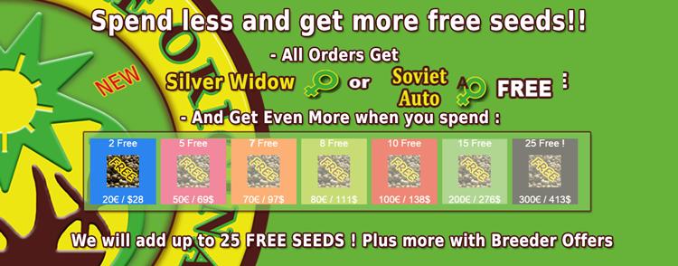 Buy OG Kush Seeds Online - Click Here