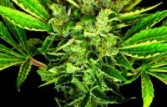 DNA Genetics Seeds Martian Mean Green