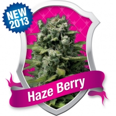 Royal Queen Haze Berry