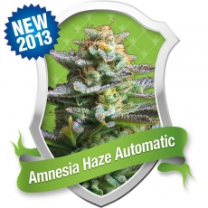 Royal Queen Seeds Amnesia Haze Automatic
