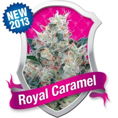 Royal Queen Seeds Caramel