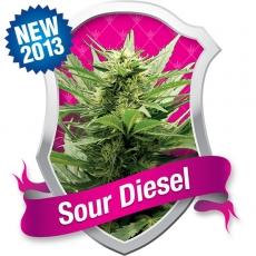 Royal Queen Seeds Sour Diesel