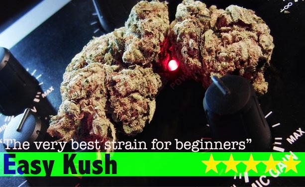Buy Marijuana Seeds Online Free Marijuana Seeds With Every Order
