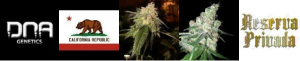 OG Kush Seeds From DNA Genetics and Reserva Privada