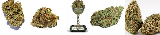 Three Classifications Of OG Kush Seeds