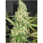 Power Plant Seeds by Professional Seeds