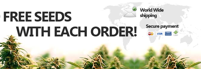 Where To Get Marijuana Seeds Free With Every Order
