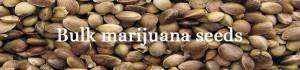 Buy Marijuana Seeds in Bulk