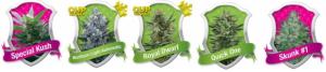 Bulk Marijuana Seeds From Royal Queen Seeds
