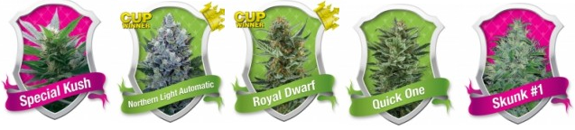 Bulk Marijuana Seeds From Royal Queen Seeds