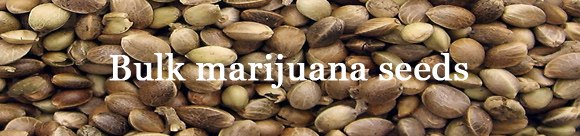 Buy Bulk Cannabis Seeds and Save Money