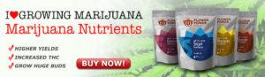 Buy Marijuana Nutrients