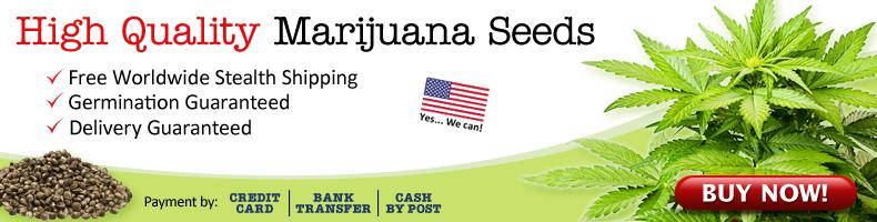 Where To Get Marijuana Seeds Online - Free USA Shipping.