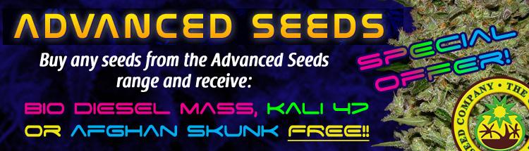 Buy The Best Marijuana Seeds Online - Free Marijuana Seeds With Every Order!