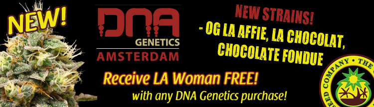 Free Cannabis Seeds From DNA Genetics