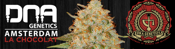 Buy DNA Genetics LA Cheapest DNA Genetics LA Chocolate Seeds