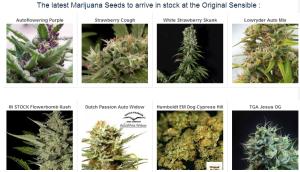 Buy Cheap Cannabis Seeds