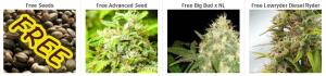 Cheap Cannabis Seeds