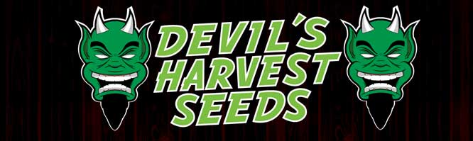 Devils Harvest Seeds