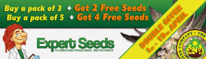 Expert Cannabis Seeds DOUBLE YOUR SEEDS OFFER!