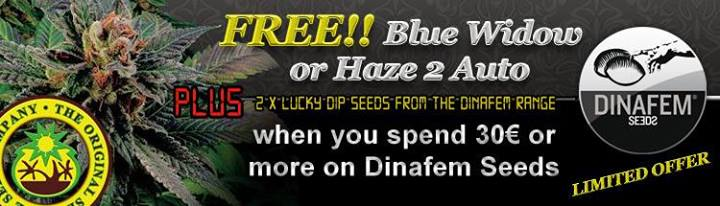 Free Cannabis Seeds - Latest Offers - Dinafem Seeds Collection