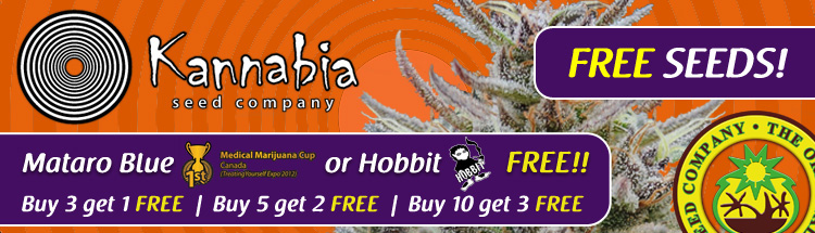 Free Cannabis Seeds From Kannabia Seeds