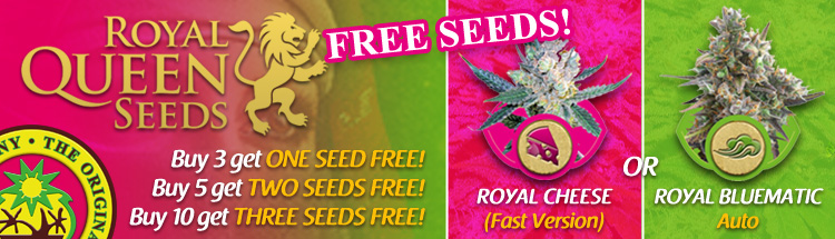 Free Cannabis Seeds Latest Offers - Royal Queen Seeds