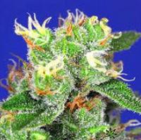 Medical Marijuana Seeds To Increase Appetite