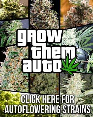 Buy Autoflowering Seeds - Best Online Prices - Free Cannabis Seeds USA Shipping