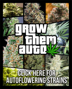Buy Autoflowering Seeds - Best Online Prices - Free Cannabis Seeds