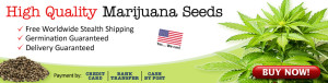 Buy Cannabis Seeds In The USA